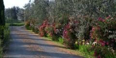 Capanna entry