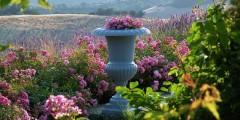 Capanna flowers 2