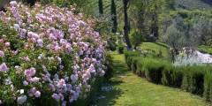 Lavanda garden 3