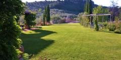 Mahonia garden 2