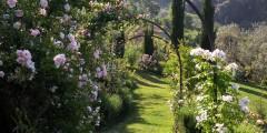 Mahonia garden 4
