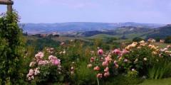 Mahonia view 2